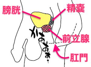 アネロス(エネマグラ)とネクサスレボを使うと前立腺の開発がグングン進む!