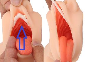 口の中の性感帯の場所